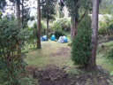 Camping Kryptomeria